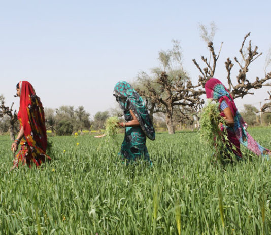 economic survey of india says women participation increased in agriculture